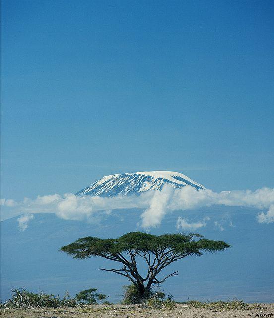Kibo Summit, Mount Kilimanjaro    Mount Kilimanjaro, Kibo Summit, in the early morning from Amboseli Dry Lake, with Thorn Tree; Kenya/ Tanzania, East Africa.    Photo by John Hurst — 1976
