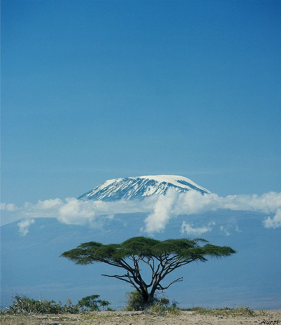 Kibo Summit, Mount Kilimanjaro    Mount Kilimanjaro, Kibo Summit, in the early morning from Amboseli Dry Lake, with Thorn Tree; Kenya/ Tanzania, East Africa.    Photo by John Hurst — 1976