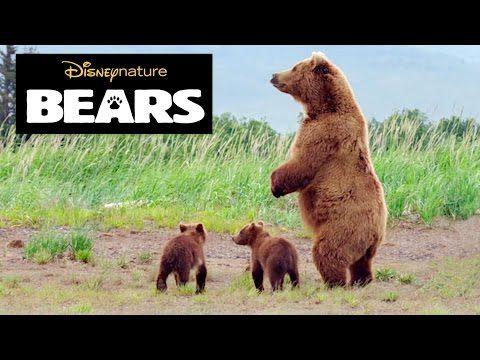 Disneynature Bears | Brown Bear Facts | Disney Insider - YouTube