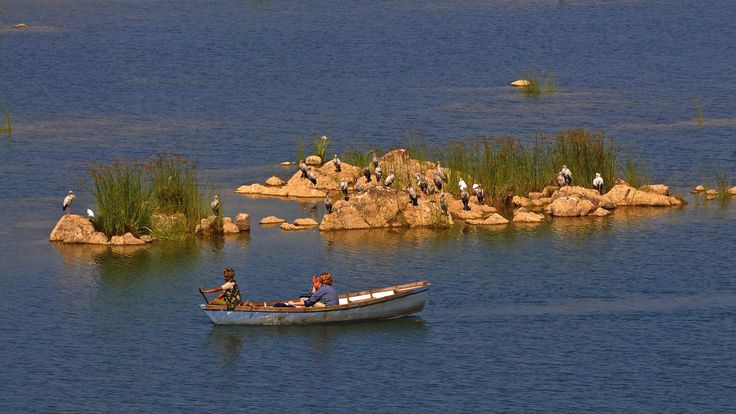 Boat Safari at Panna Enjoy the carefree Boar Ride on the mesmerising river Ken.