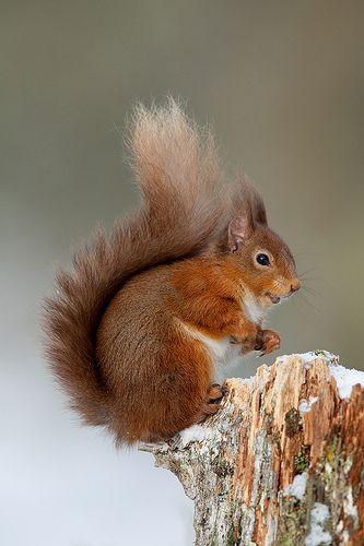 Écureuils ; mes chouchous