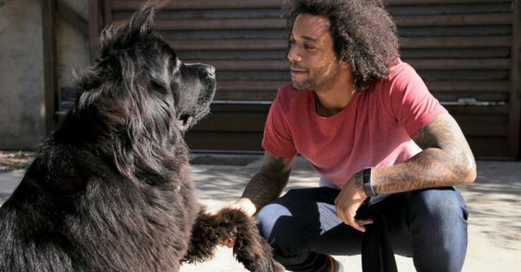 15 Footballers And Their Furry, Four-Legged Friends. #animalsinsoccer #soccer #soccerplayers #soccerdogs #footballers #furryfriends #soccerlists