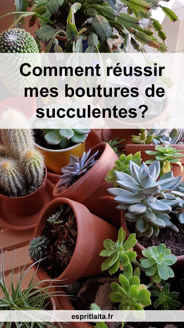 Bouturer Les Succulentes Bouturer Les Plantes Grasses Avec