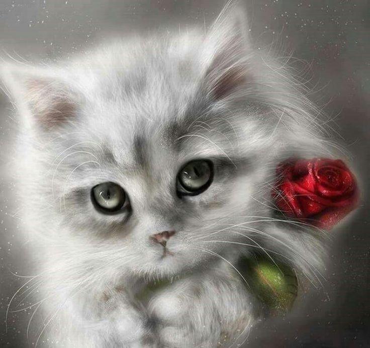Картинки любимому котенку, можно написать