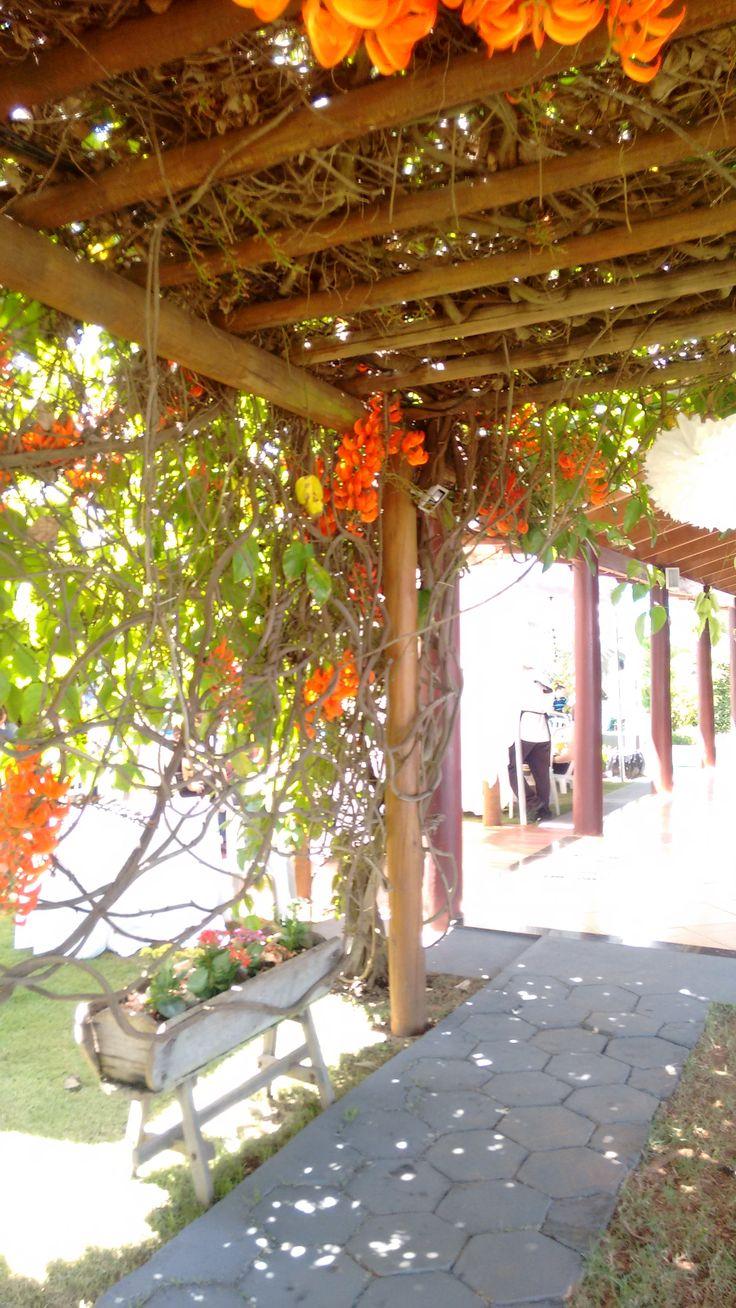 Pergolado com jade laranja