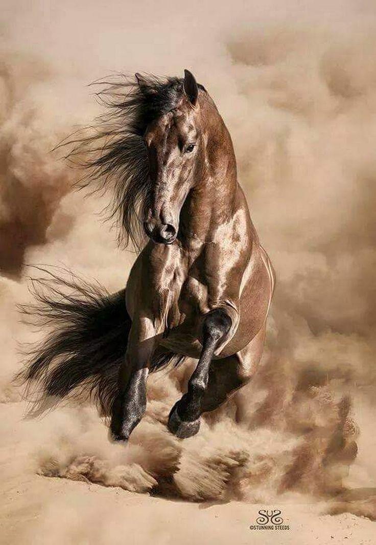 Stunning horse!