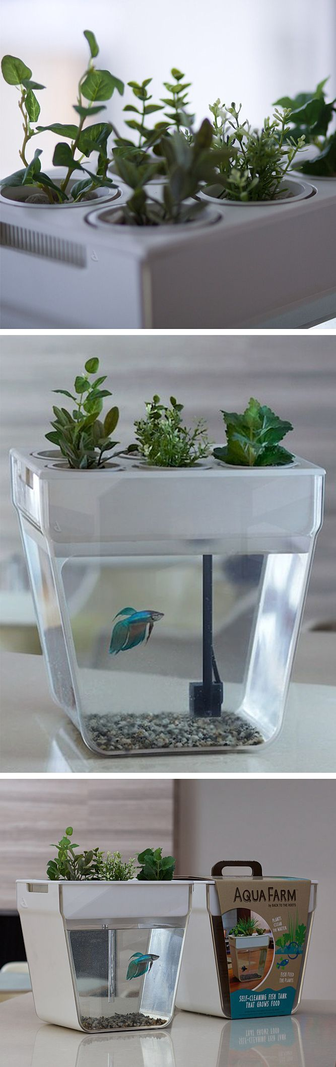 a self cleaning self feeding fish tank product design