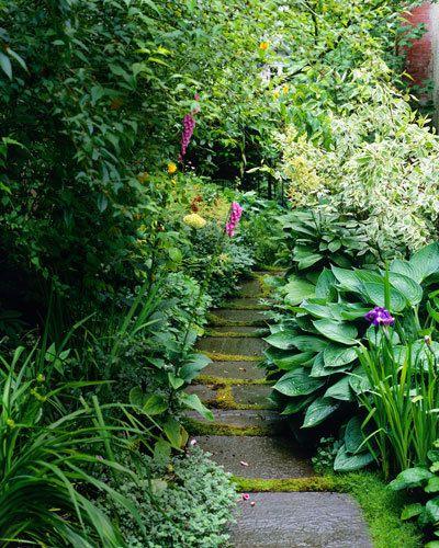 Shady garden solutions