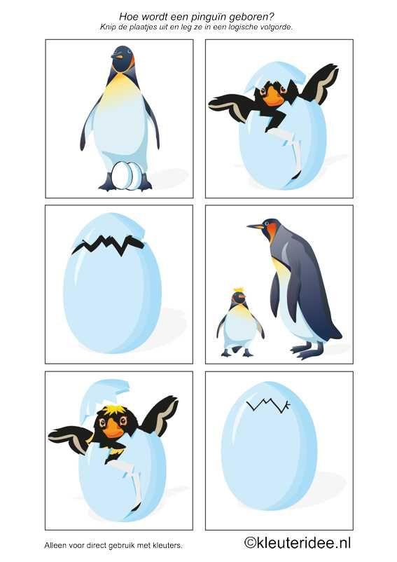 Logische volgorde, de geboorte van een pinguïn, kleuteridee.nl , logical sequence birth of a penguin, free printable