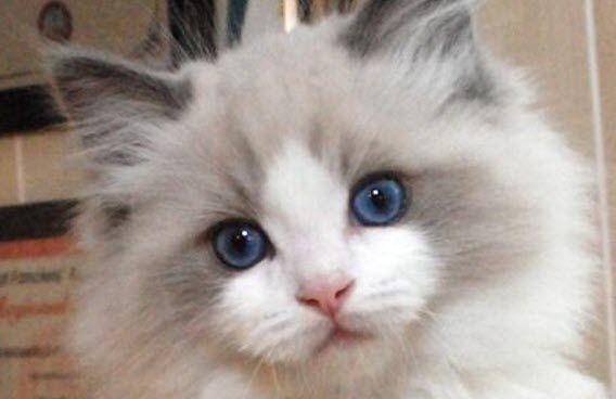 Impossibly Cute Furball! – 26th July 2014 ^