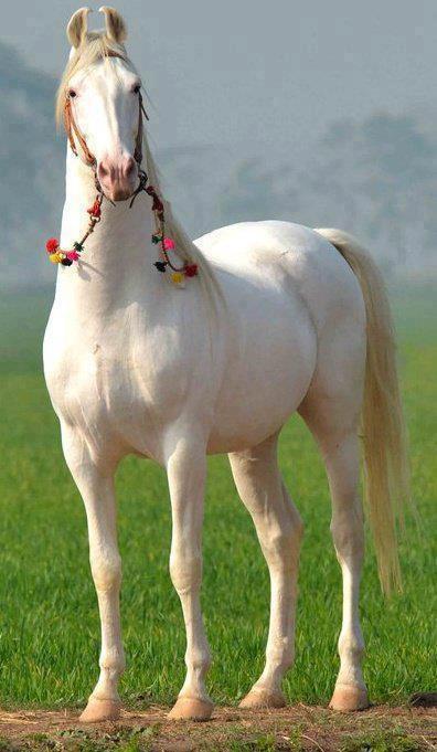 caballo hindu personals Gizmodo uk, london, united kingdom 13k likes gizmodo uk better living through technology wwwgizmodocouk.