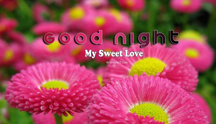Good Night Wishes Image For Whatsapp