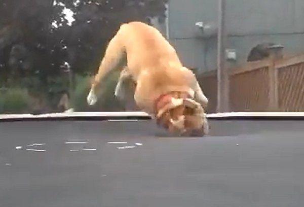 Le trampoline c'est cool !