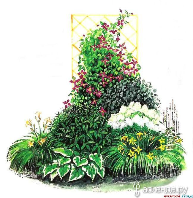 Летние цветы. Лилейники.: Дневник пользователя Светлана Рогозенкова