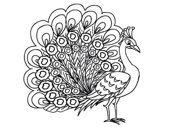 peacock beautiful peahen a female peacock coloring page beautiful peahen a female peacock coloring pagefull size image - Peacock Coloring Book