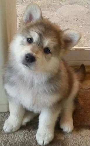 Owner: Aww, it's a cute puppy. the dog: what are you looking at?