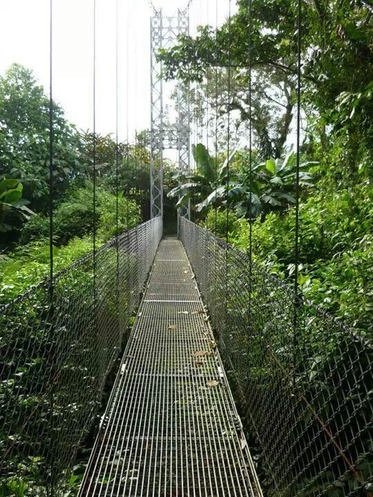 Puentes colgantes. Costa Rica.