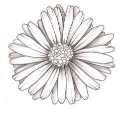 Big daisy tattoo design