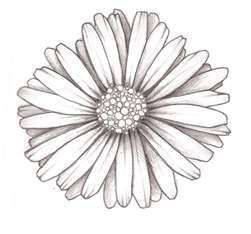 Big daisy tattoo design