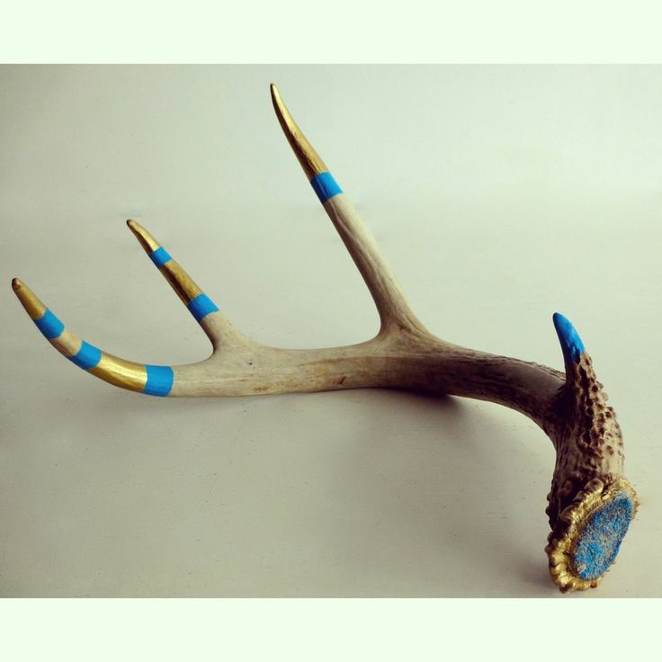 #antler #art #wildlife #collection #antlerart #rebeccabrianceau