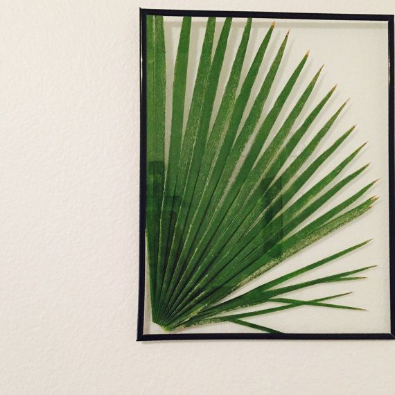 Pressed Palm Leaf Botanical Framed 11x14 - Herbarium - Pressed Flower Botanical - Cactus Art- Floating Frame- Pressed Flower
