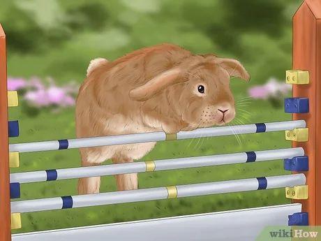 Image titled Train a Rabbit Step 7