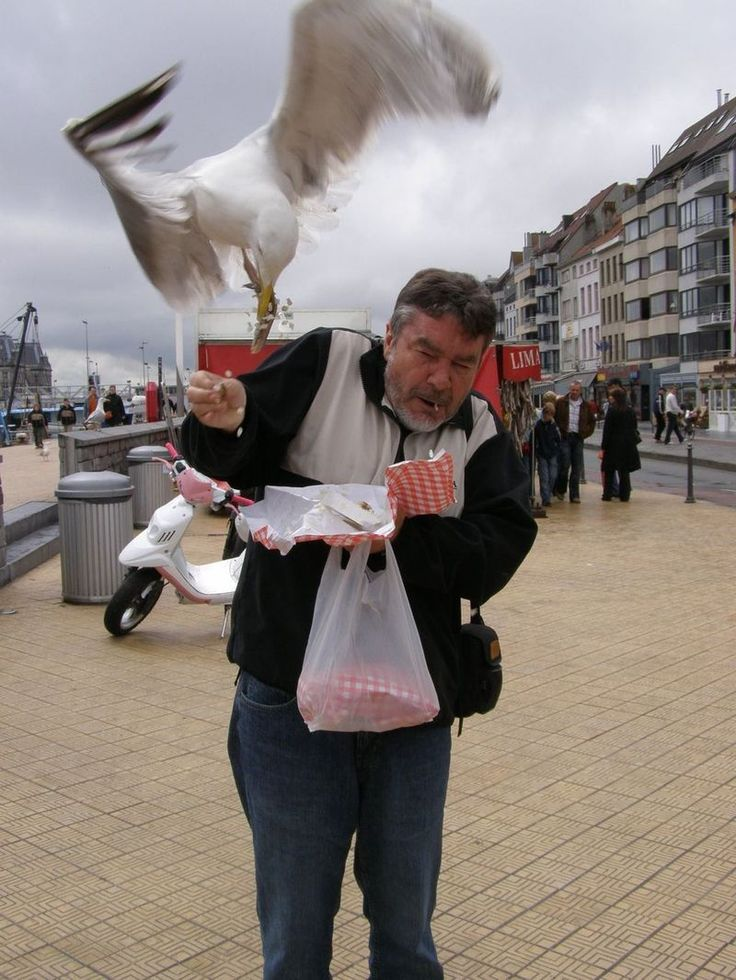 A European herring gull goes after a man's lunch.