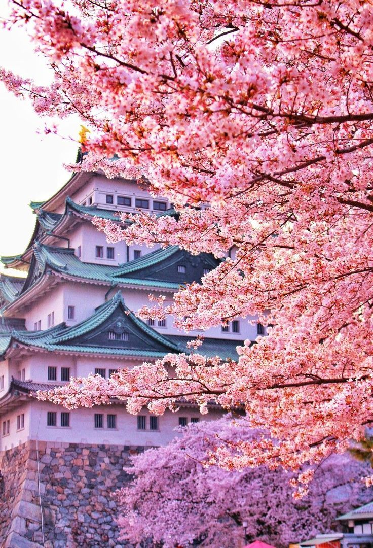 Cherry Blossoms Japan Landscape Cherry Blossom Wallpaper Beautiful Nature Wallpaper