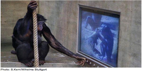 Apen kijken ook televisie.