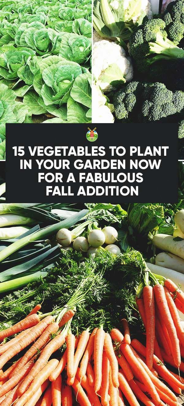 15 Vegetables to Plant Right Now for Productive Fall Garden Harvest