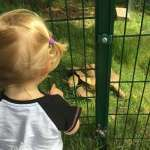 Pets Corner - Astley Park - Chorley - Days Out North West Lancashire