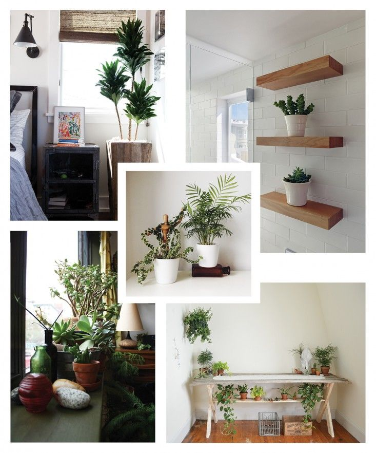 indoor garden inspiration! I'm obsessed with indoor plants lately