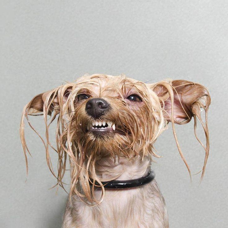 Wet Dog 1 / Sophie Gamand