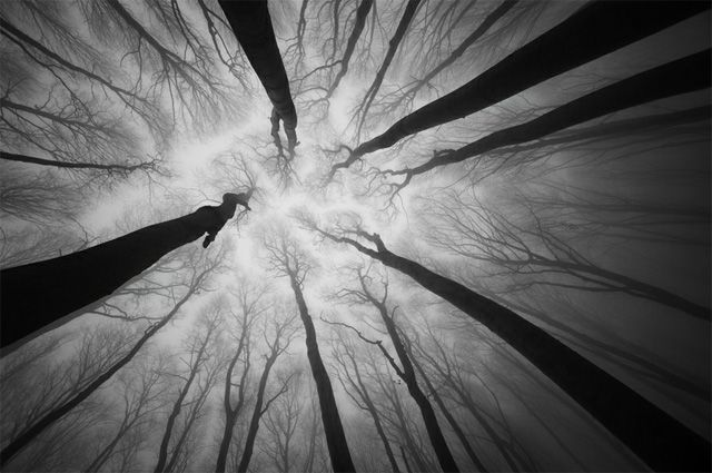 These lovely, ethereal photos of mist-filled forests were captured by brothers Andrei and Sergiu Cosma of PhotoCosma who live and work in Romania
