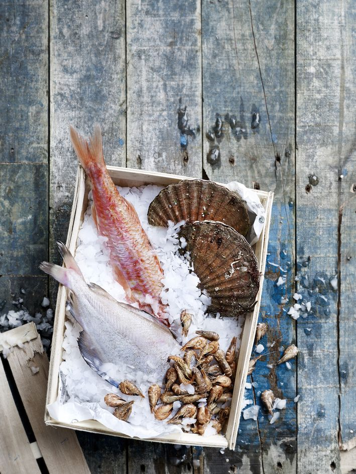 food photography wout hendrickx - seafood - fish - foodstyling Lot Van Riel