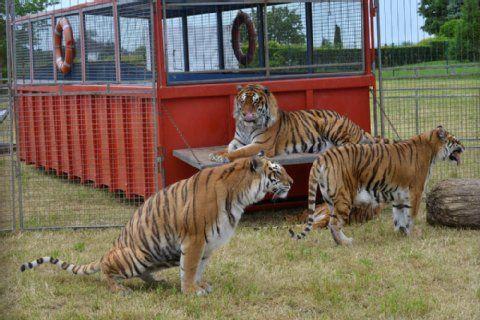 Tierschutz in Bergisch Gladbach #gl1: Demo gegen Zirkus Althoff - Die Bergisch Gladbacher Grünen protestieren gegen den Einsatz von Löwen und Tigern in der Manege des Zirkus' Althoff und haben zu Demos aufgerufen. Der Zirkus hat sein Quartier auf einem Gelände an der Nussbaumer Straße aufgeschlagen.
