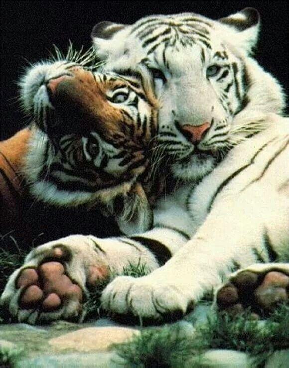 Enjoying caturday!! #caturday #love