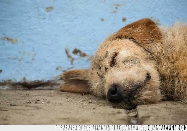 Arthur, el perro que se unió a un equipo sueco en carrera y se negó a quedarse atrás #love #dog #team #motivation