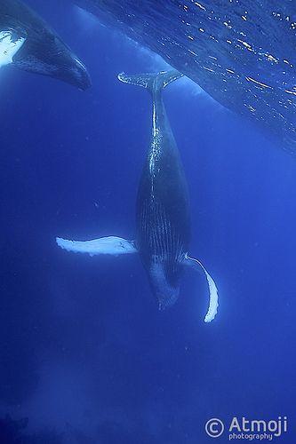 WildQuest Whale retreat - 2014/1
