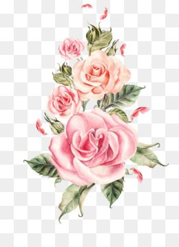 Free Download Wedding Rose Flower Hand Painted Pink Roses Bouquet Png Pink Watercolor Flower Floral Painting Flower Bouquet Png