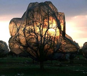 Christo - wrapped trees.  He makes me see with fresh eyes. Concealed.