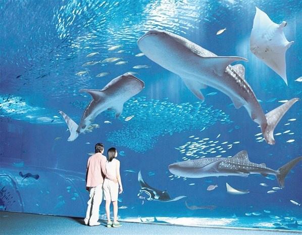 De beste aquariums ter wereld (© Sea Aquarium)