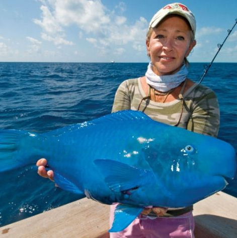 Blue parrot fish this weird but amazing looking fish is for How many fish are in the world
