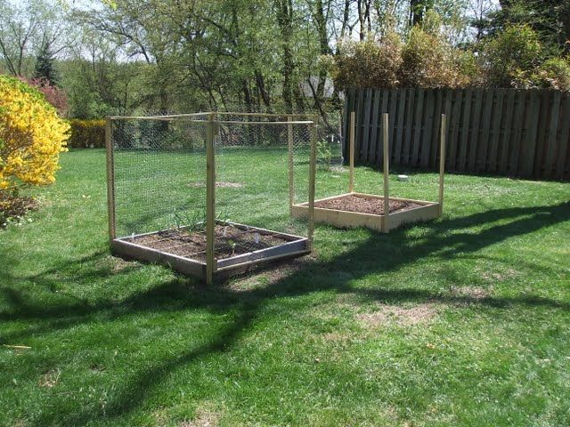 240 best images about deer proof garden on pinterest garden fencing gardens and a deer - Deer proof vegetable garden ideas ...