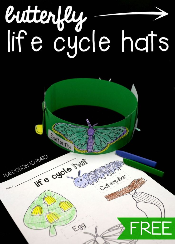 Fun butterfly life cycle hats! Great spring craft and spring science project in one. Perfect for preschool or kindergarten!