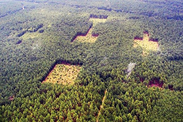 Earth's Forests Are Broken | TakePart - YOU CAN MAKE A DIFFERENCE! Choose to use post-consumer goods, renewable resourced goods, and no virgin products. Reduce, ReUse, Recycle and Save Our Planet with every purchase you make! It DOES make a difference!