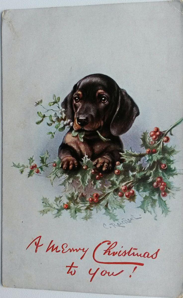 Vintage postcard Dachshund puppy with Christmas tree branch by Reichert