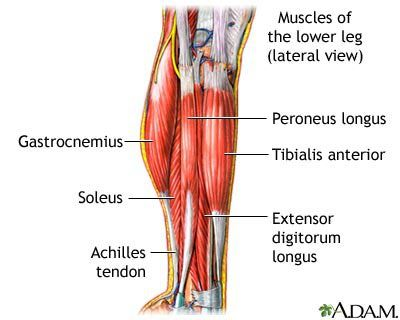 Calf Muscle Pain - Calf Strain or Pull