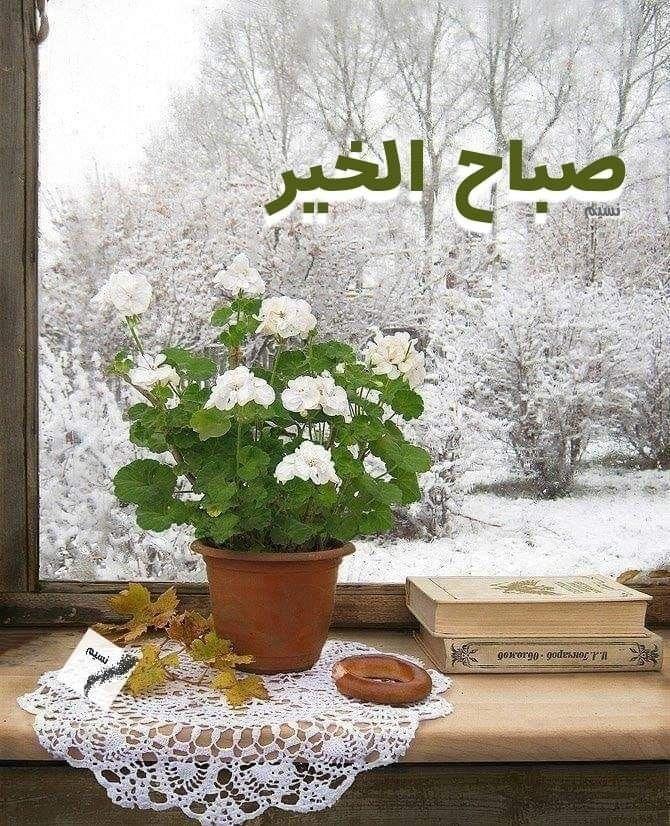 ويخبرنا الصباح أن كل شيء تتعاقب عليه المواسم والفصول إلا القلوب النقية فلا يمي Good Morning Photos Good Morning Arabic Fake Flower Arrangements