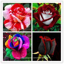 200 sztuk Rose nasiona, rzadko egzotyczne nasiona Chiński Rose Kwiaty dla domu ogród roślin, 24 kolory(China (Mainland))